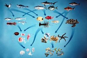 ekosistema